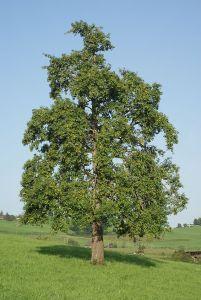 arbre9